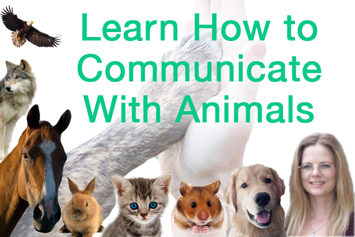 animal communication Human and animal communication creates a valuable bridge between human and non-human animals by connecting with our intuition, we can engage in meaningful dialogue and remember how to hear the subtle messages from those whose space we share in our lives and our natural environment.